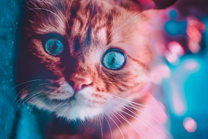 Cat Glowing Eyes Wallpaper