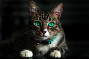 Cat Green Eyes 4k