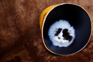 Cat In Bucket Wallpaper