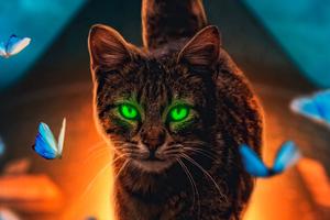 Cat Magical Walk 4k
