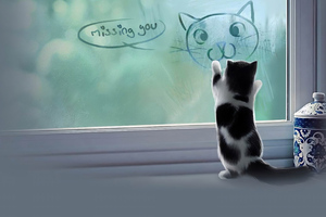 Cat Missing You Wallpaper
