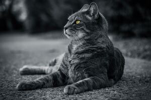 Cat Monochrome 4k