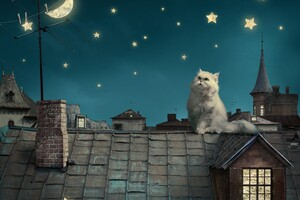 Cat Moon Stars Digital Art Dreamy 5k
