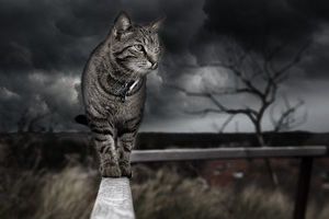 Cat Photo Manipulation 4k