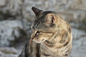 Cat Portrait Close View 4k