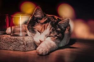 Cat Sleeping Wallpaper