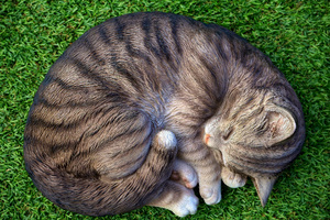 Cat Sleeping Relax Cute 5k Wallpaper