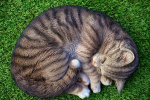 Cat Sleeping Relax Cute 5k Wallpaper