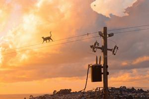 Cat Walking On Powerline 4k