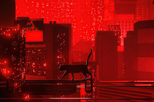 Cat Walking Red Night 5k