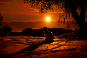 Cat Watching Sunset 4k