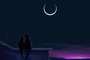 Cats Like The Night Wallpaper