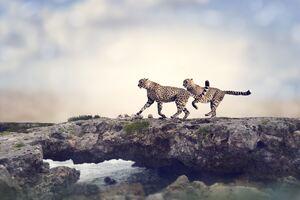 Cheetah 5k