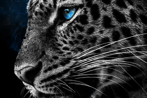 Cheetah Galaxy Eyes Wallpaper