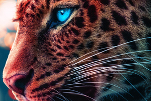 Cheetah Magical Eyes 4k Wallpaper