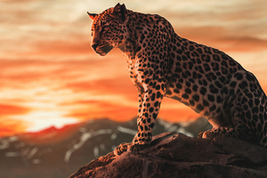 Cheetah Morning Time 4k Wallpaper