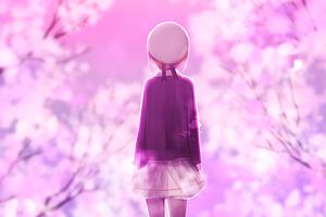 Cherry Blossom Walk Wallpaper