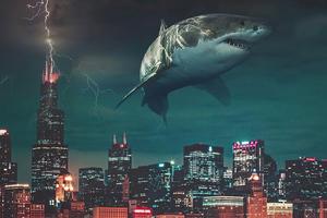 City Sharks 5k