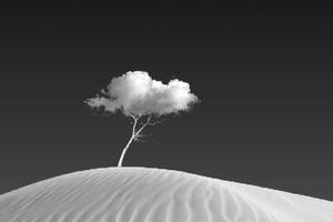 Cloud On Tree Wallpaper