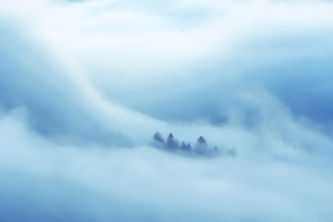 Clouds Covered Heaven Trees 5k Wallpaper