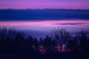Clouds Forest Landscape Lilac Purple Serene Sunrise Sunset Trees 5k Wallpaper