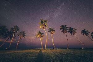 Coconut Trees Under Starry Sky Wallpaper