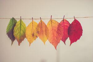 Colorful Autumn Leafs 5k