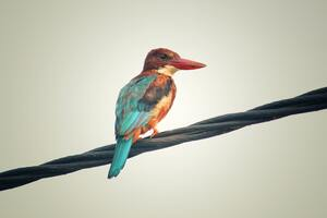 Colorful Avian Bird Side View Wallpaper