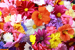 Colorful HD Flowers Wallpaper