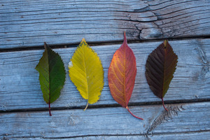 Colorful Leaves Wood Outdoors