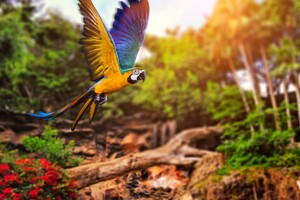 Colorful Parrot 4k Wallpaper