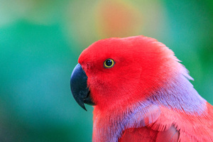 Colorful Parrot 5k Wallpaper