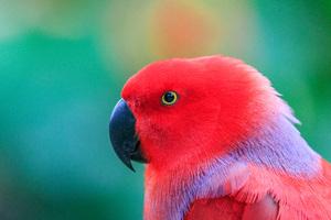 Colorful Parrot 5k Wallpaper