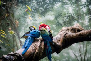 Colorful Parrots Couple Wallpaper