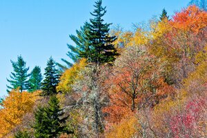 Colorful Trees Wallpaper