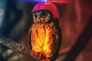 Cop Owl 4k Wallpaper