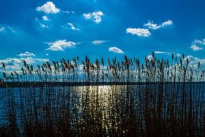 Crops Near Body Of Water Heaven Silent Outdoors 5k