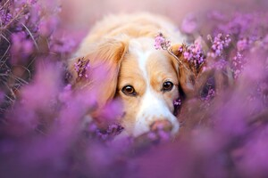 Cute Dog In Flowers
