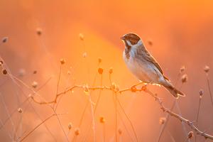 Cute Little Bird 4k Wallpaper