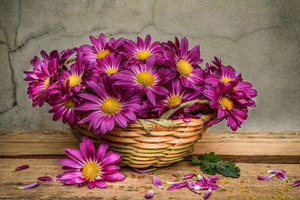 Daisies In A Basket Wallpaper