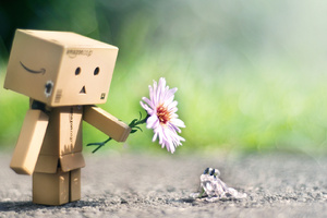 Danbo With Flower Wallpaper