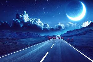 Deer Crossing The Road Magical Night