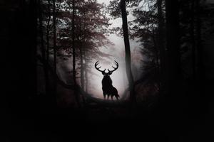 Deer Fantasy Artwork 4k