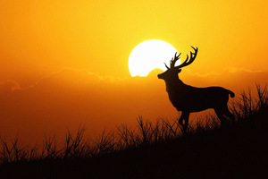 Deer Silhouette Evening 5k Wallpaper