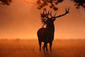 Deer Sunlight Nature