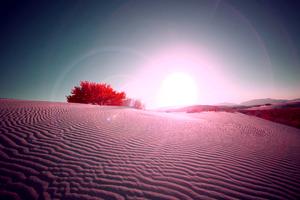 Desert Flare