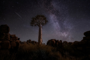 Desert Trees Milky Way Night 4k Wallpaper