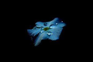 Dew Drops On Flower Oled 4k Wallpaper