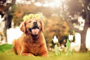 Dog Flowers Smiling Wallpaper