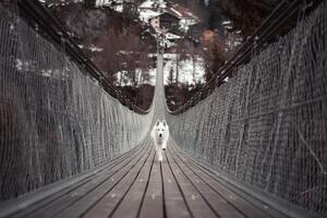 Dog Running Bridge 5k Wallpaper